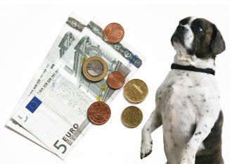 Hundehaftpflichtversicherung - Hund mit Geld