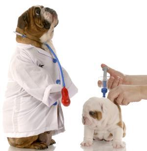 Hund wird geimpft