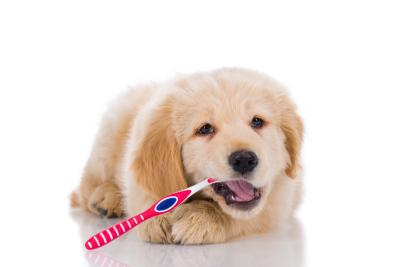Hunde mit Zahnbürste