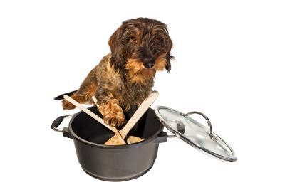 Rezepte zum selberkochen für Hunde