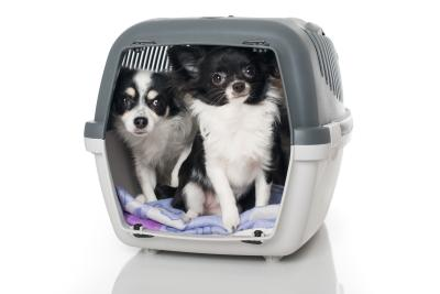 Hunde Transportbox