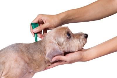 Flea And Tick Home Remedies For Dogs And Cats
