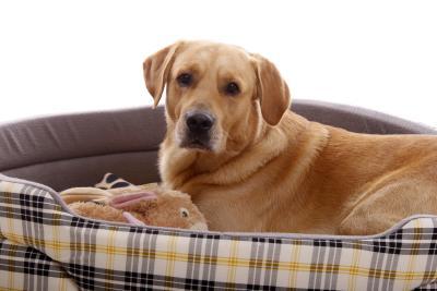 Hund im Hundekorb