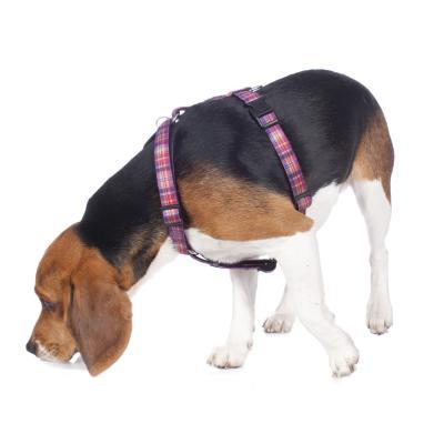 Hundegeschirr am Welpen