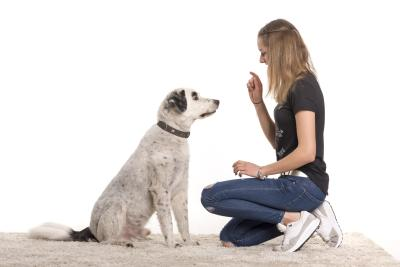 Hundekommandos beibringen