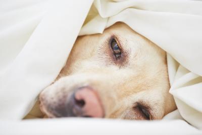 Hundekrankeheiten erkennen