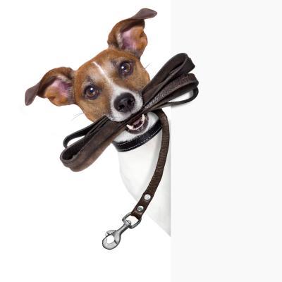 Hundeleine mit Hund