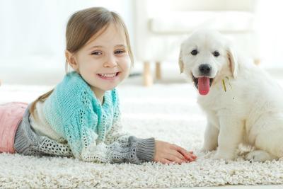 Hund ohne Papiere kaufen?