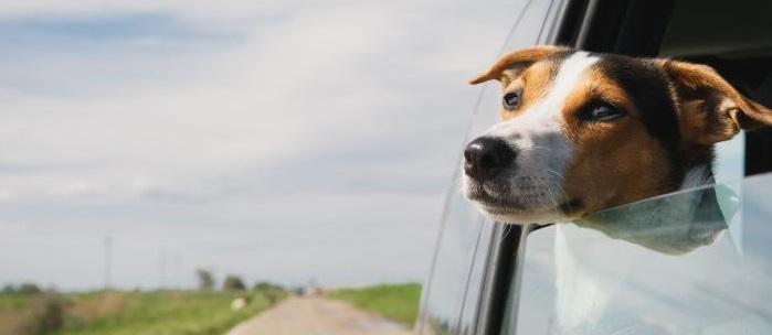 Hund fährt in den Urlaub