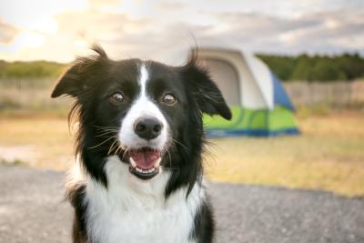 Hund durch Transbortbox mit im Urlaub